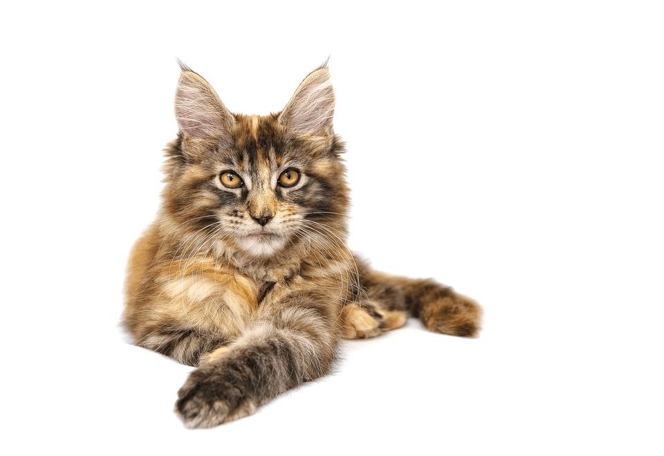 Har du kat? Så læs med her